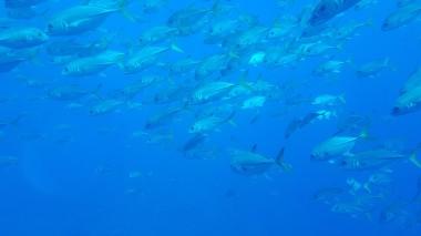 FISH - Photo by Technicalbob